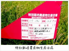 特別栽培農産物生産ほ場